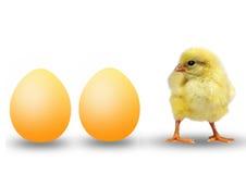 Zwei Eier und kleines Huhn Stockfotos