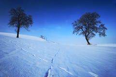 Zwei einzige Bäume in der schneebedeckten Landschaft des Winters mit blauem Himmel Stockfoto