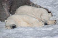 Zwei Eisbären aalen sich im hellen Sonnenschein Stockbilder