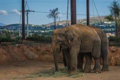 Zwei Elefanten, die auf den Rasen, Griechenland gehen lizenzfreies stockbild