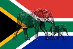 Zwei Elefanten, die auf südafrikanischer Flagge gelegt werden - machen Sie glatt Lizenzfreies Stockbild