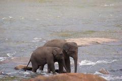 Zwei Elefanten, die in Fluss gehen Stockfotografie