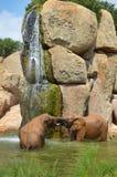 Zwei Elefanten, die unter einem Wasserfall verpfänden Stockfotografie