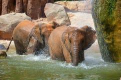 Zwei Elefanten, die unter einen Wasserfall gehen Lizenzfreies Stockfoto