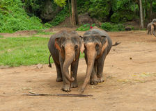 Zwei Elefanten in einem Park Stockbilder