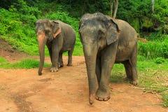 Zwei Elefanten in einem Park Lizenzfreies Stockfoto