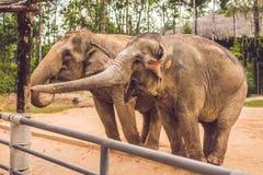 Zwei Elefanten im Zoo bitten um Lebensmittel lizenzfreie stockbilder