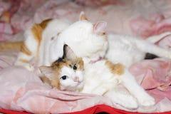 Zwei entspannende Katzen lizenzfreie stockfotos