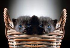 Zwei entzückende schwarze Kätzchen im Korb lizenzfreie stockfotografie