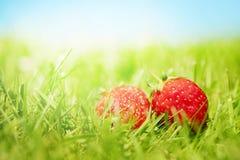 Zwei Erdbeeren auf dem Gras stockbilder