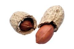 Zwei Erdnüsse Stockfotos