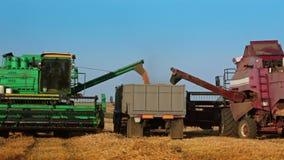 Zwei Erntemaschinen entladen Korn zum LKW stock footage