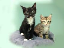 Zwei erschrockene Kätzchen - eine getigerte Katze und ein Smoking Stockfotografie