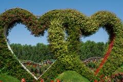 Zwei erstaunliche schöne grüne Herzen gemacht von den Blumen im Garten Lizenzfreie Stockfotografie