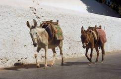 Zwei Esel auf den Straßen Stockfoto