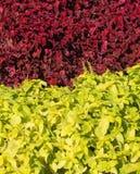 Zwei Farbenanlagen Lizenzfreies Stockfoto