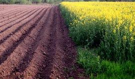 Zwei Felder Stockbild