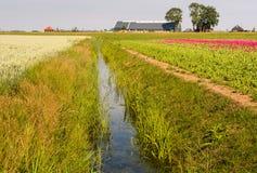 Zwei Felder zur Hälfte geteilt durch einen Abzugsgraben Lizenzfreie Stockbilder