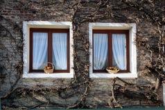 zwei braune fenster mit gr nen fensterl den und blumen stockfoto bild 54309734. Black Bedroom Furniture Sets. Home Design Ideas