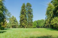 Zwei Fichten auf Lichtung im Park Lizenzfreies Stockbild