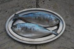 Zwei Fische auf einer Mehrlagenplatte Lizenzfreie Stockfotos