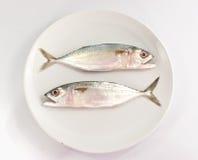 Zwei Fische auf weißer Platte und weißem Hintergrund Stockfotos
