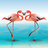 Zwei Flamingos vektor abbildung