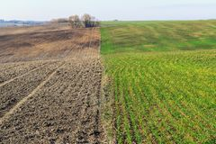 Zwei Frühlingsfelder - cultiveted und mit jungen Ernten Stockbilder