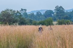 Zwei Frauen, die in der afrikanischen Wildnis wandern lizenzfreies stockfoto