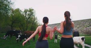Zwei Freunddamen mitten in Landschaftslandschaft haben ein Training, das zusammen neben einer Gruppe des Kuhnehmens läuft