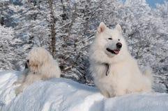 Zwei Freunde im tiefen Schnee Stockfotos
