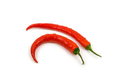 Zwei frisch gewaschene rote Paprikas Stockbild