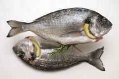 Zwei frische dorado Fische Lizenzfreie Stockfotos
