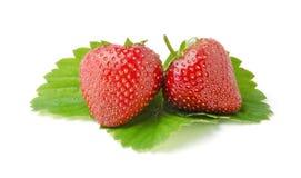 Zwei frische Erdbeeren mit Blättern Lizenzfreies Stockbild