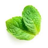 Zwei frische tadellose Blätter lokalisiert auf Weiß Lizenzfreie Stockfotografie