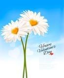 Zwei Gänseblümchen mit geformten Mitten des Herzens Lizenzfreies Stockfoto