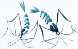 Zwei Garnelen gezeichnet durch blaue Aquarelle stockfotos