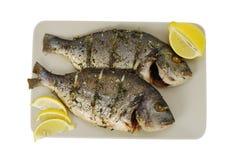 Zwei gebratene Denis-Fische auf Platte Lizenzfreie Stockbilder