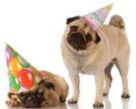 Zwei Geburtstaghunde lizenzfreies stockfoto