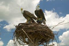Zwei gefälschte Adler Stockfotografie