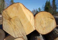 Zwei gefällte Baumkabel Stockfotografie