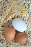 Zwei gelbe Eier und ein weißes Ei, Weizen und gelbe Blumen Lizenzfreie Stockbilder