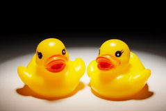Zwei gelbe Enten Lizenzfreie Stockfotografie