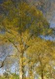 Zwei gelbe Herbstbäume mit ausbreitenden Niederlassungen werden in der Oberfläche des blauen Wassers reflektiert Lizenzfreie Stockfotos