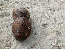 Zwei getrocknete Kokosnuss auf der Sandhintergrundbeschaffenheit lizenzfreie stockfotografie