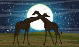 Zwei Giraffen in der afrikanischen Savanne Nacht und großer Mond lizenzfreie abbildung