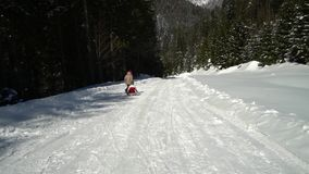 Zwei glückliche schöne Kinder haben Spaßpferdeschlittenfahrten in einem schneebedeckten Wald in den Bergen im Winter Bruder und stock footage