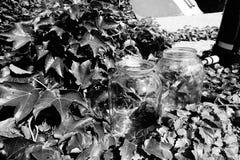 Zwei Glasgefäße umgeben durch Blätter Stockfotos