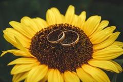 Zwei goldene Eheringe liegen auf großer Sonnenblume mit Hintergrund des blauen Himmels stockbild