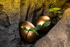 Zwei goldene Eier versteckt in einer Baumöffnung Lizenzfreies Stockfoto